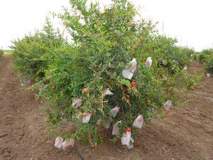 Fruit Grow Cover
