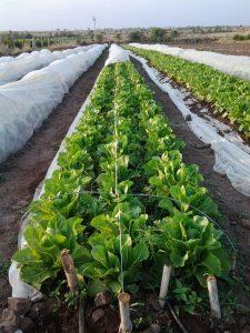 Crop Grow Cover